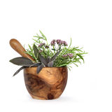 Rosemary, Sage and Marjoram Herbs. Rosemary, sage and marjoram herb leaves and flowers and an olive wood pestle and mortar, over white background stock image