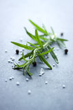 Rosemary with salt and pepper Royalty Free Stock Image