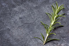 Rosemary on Slate Top View. Rosemary sprig on dark slate.  Top view with copy space Royalty Free Stock Photography