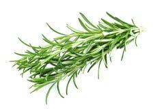 Rosemary spice Stock Photo