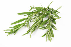 Rosemary spice Royalty Free Stock Photo