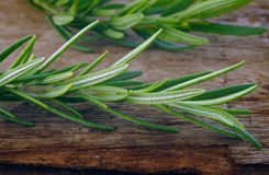 Rosemary Stock Photos