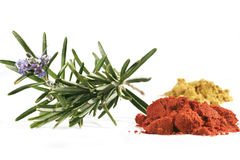 Rosemary and spices isolates on white background Royalty Free Stock Photo