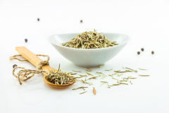 The rosemary spices on white background for decorate project. Stock Photos