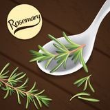 Rosemary on spoon Stock Images