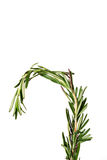 Rosemary sprig. Shot of a rosemary sprig isolated on white Stock Images
