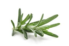 Rosemary sprig isolated Stock Photos