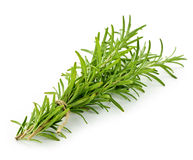 Rosemary sprigs Stock Photos