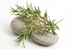 Rosemary sprigs on stones Royalty Free Stock Photography