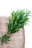 Rosemary sprigs tied in bundle isolated on white background. Fresh Rosemary sprigs tied in bundle isolated on white background Royalty Free Stock Image