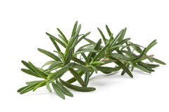 Rosemary Stalk Stock Photo