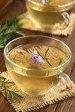 Rosemary Tea Stock Photo