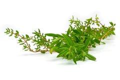 Rosemary, thym, herbes fraîches sur le blanc avec le fond brouillé Photos stock