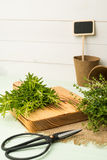 Rosemary and thyme Stock Photos