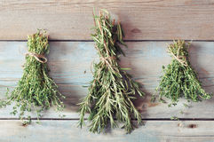Rosemary and thyme Royalty Free Stock Photography