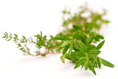 Rosemary, Thyme, fresh herbs on white with blurred background.  royalty free stock photos