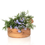 Rosemary and Thyme Herbs Royalty Free Stock Images