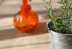 Rosemary in tin can Royalty Free Stock Photography