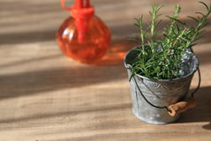 Rosemary in tin can Royalty Free Stock Images
