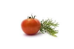 Rosemary and tomato isolated on white Royalty Free Stock Photo