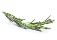 Rosemary twig herb Stock Image