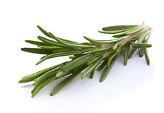 Rosemary twig herb Stock Photo
