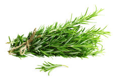 Rosemary twig isolated Stock Images