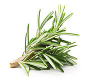 Rosemary twig Stock Image