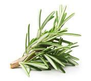 Rosemary twig Stock Image