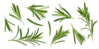 Rosemary twig and leaves isolated on white background with clipping path, collection. Rosemary twig and leaves isolated on white background with clipping path royalty free stock image