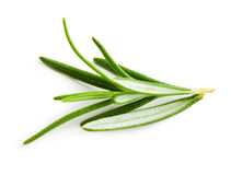 Rosemary twig Stock Images