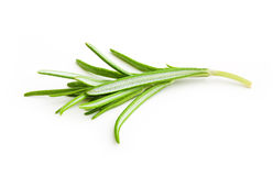 Rosemary twig Royalty Free Stock Photography
