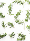 Rosemary twig Royalty Free Stock Image