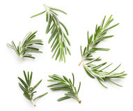 Rosemary twig Stock Photography