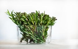 Rosemary Twigs in a Glass Pot on White Background. Used as Cooking Herb and for Medicine purposes.  stock photo