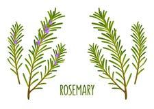 Rosemary twijgen vector illustratie