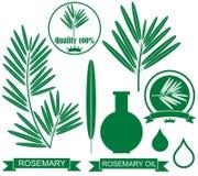 Rosemary Stock Image