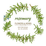 Rosemary vector set. Rosemary plant vector set on white background Stock Images