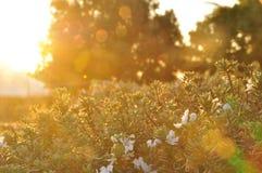 Hot herbs royalty free stock photo