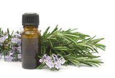 Rosemary-wesentliches Schmieröl lizenzfreies stockbild