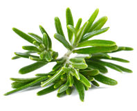 Rosemary on a white Stock Photo