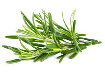 Rosemary on a white Stock Photos