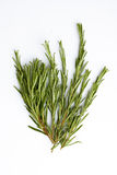 Rosemary on white background Royalty Free Stock Images
