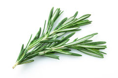 Rosemary on white Stock Photos