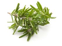 rosemary  on white Royalty Free Stock Photos