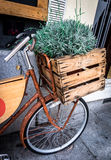 Rosemary in a Wooden Box. Rosemary in a wooden box on a bicycle, Mercado San Miguel, Madrid, Spain Stock Photo