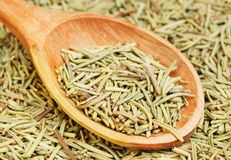 Rosemary in wooden spoon and over as background Stock Image