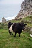 Rosemergy e bosigran in Cornovaglia Regno Unito Inghilterra Fotografie Stock
