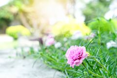 Rosemoss and flowers in the garden at home. Interiors for garden concept royalty free stock image