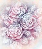 Rosen Stockbilder